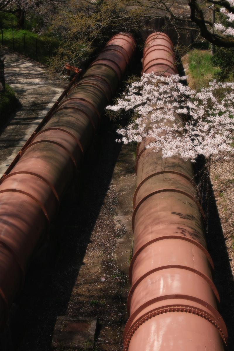 琵琶湖疏水~南禅寺 桜_f0021869_21192326.jpg