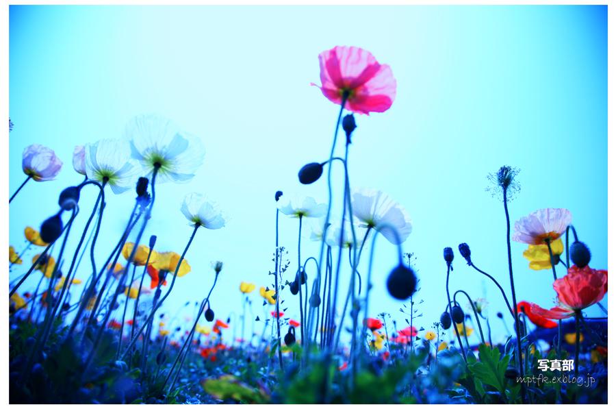 flowers_f0021869_22513011.jpg