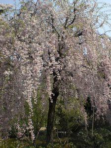 金沢の郊外にある禅寺。大乗寺_b0150576_11215173.jpg
