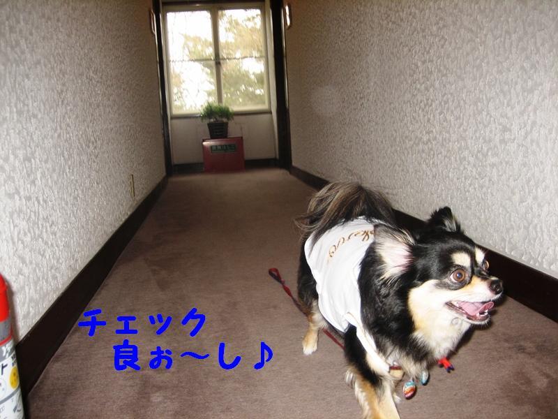 b0150088_16564170.jpg