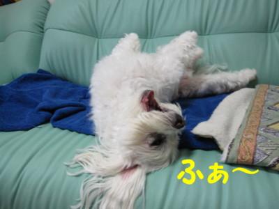 f0145192_20115088.jpg