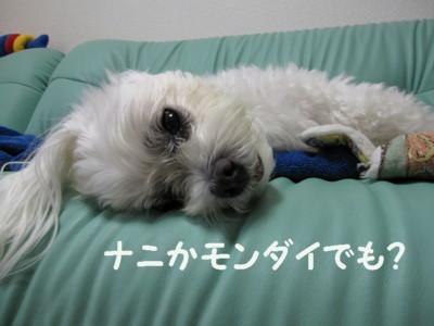 f0145192_20123141.jpg