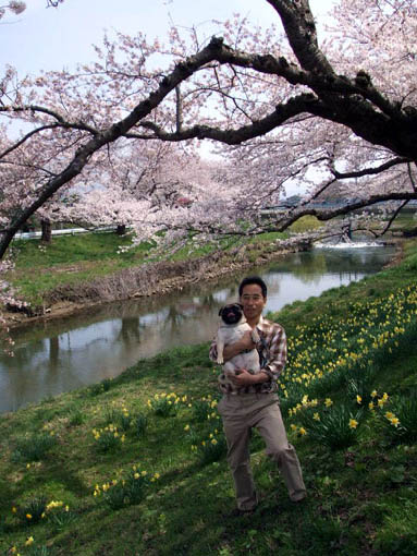 4月20日 太平川の桜並木_f0019498_17482979.jpg