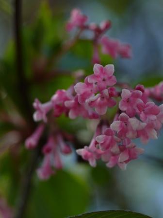 Blumen(花々)三題_b0148617_16572748.jpg