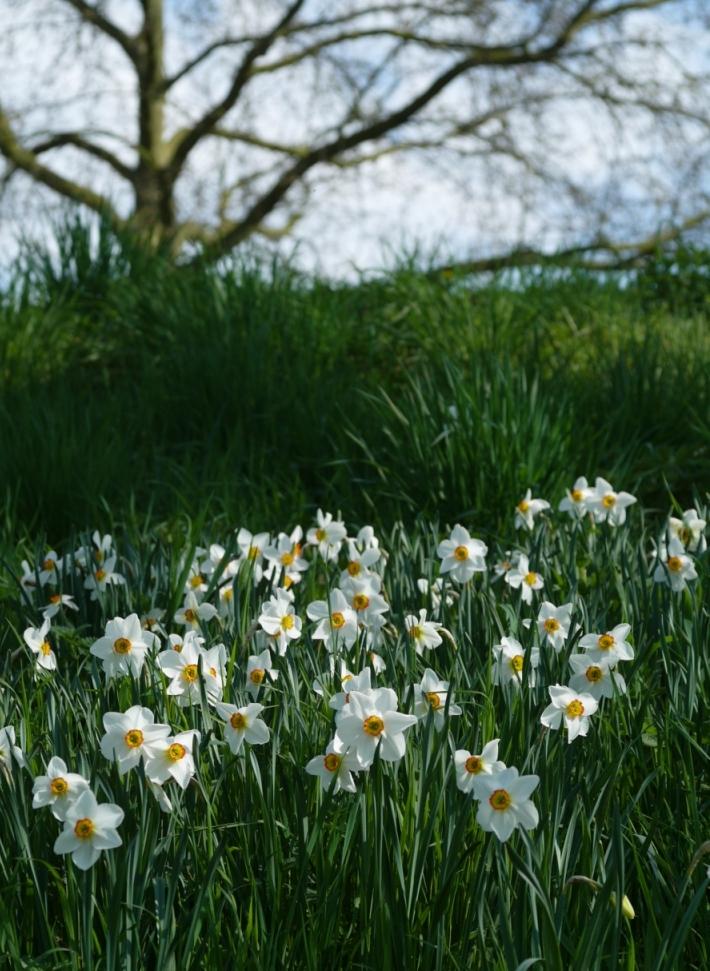 Blumen(花々)三題_b0148617_1753544.jpg