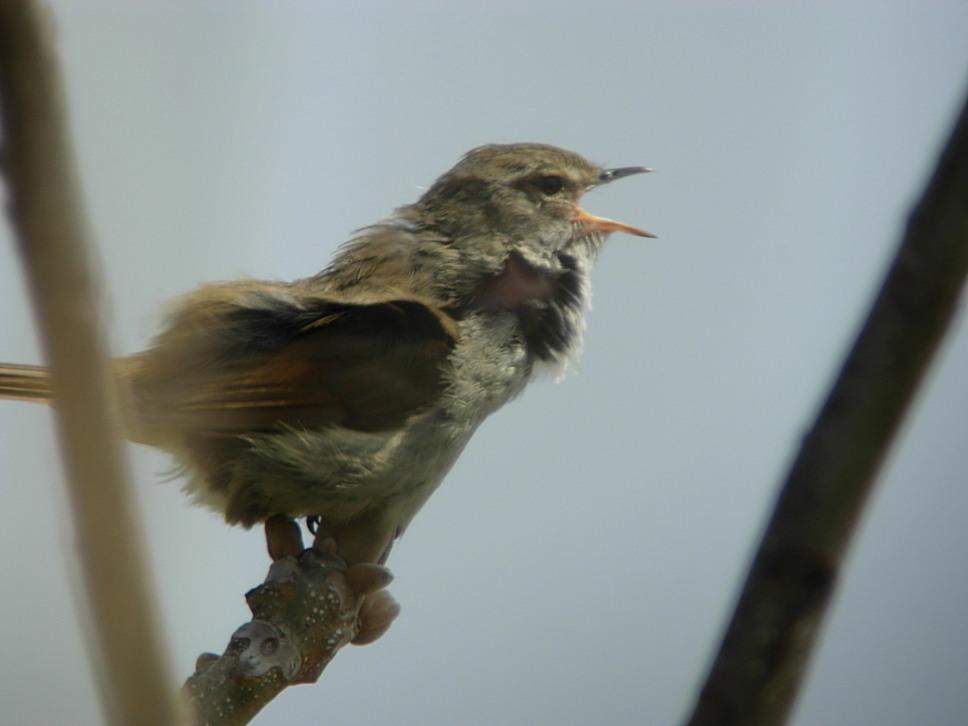 江合川の野鳥 その2_f0148627_185318100.jpg