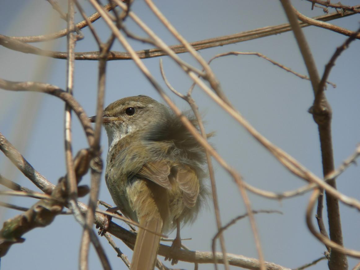 江合川の野鳥 その2_f0148627_18544054.jpg