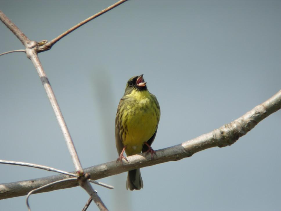 江合川の野鳥 その2_f0148627_1922985.jpg