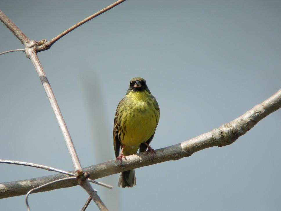 江合川の野鳥 その2_f0148627_1931285.jpg