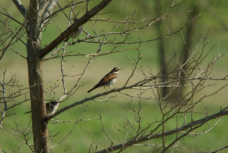 江合川の野鳥 その2_f0148627_1964425.jpg