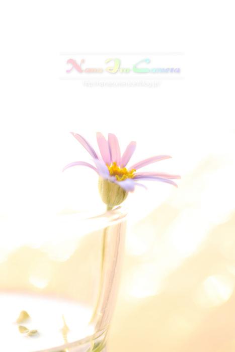 b0125038_20314457.jpg