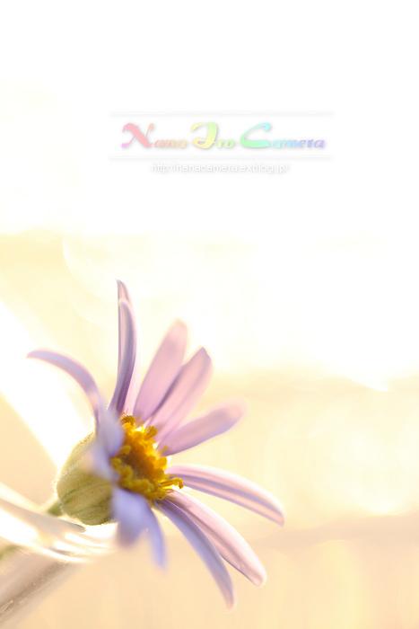 b0125038_20315261.jpg
