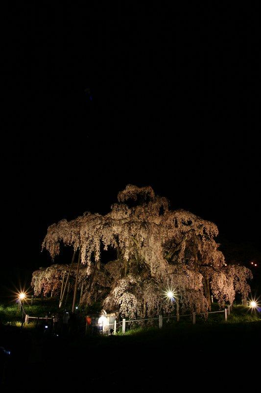 滝桜、王者の風格_f0048546_681720.jpg