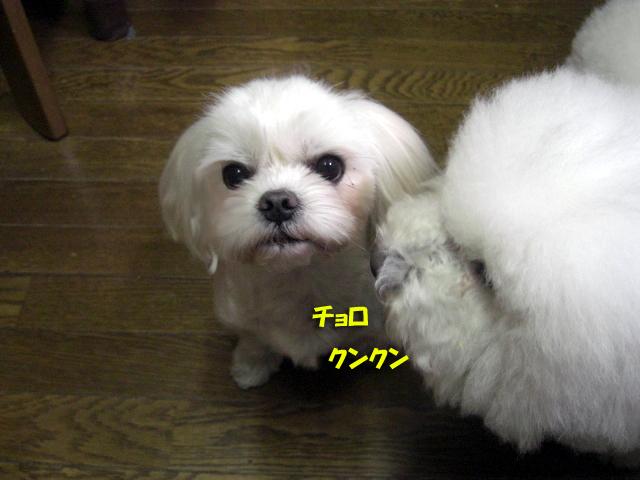 b0060071_0115959.jpg