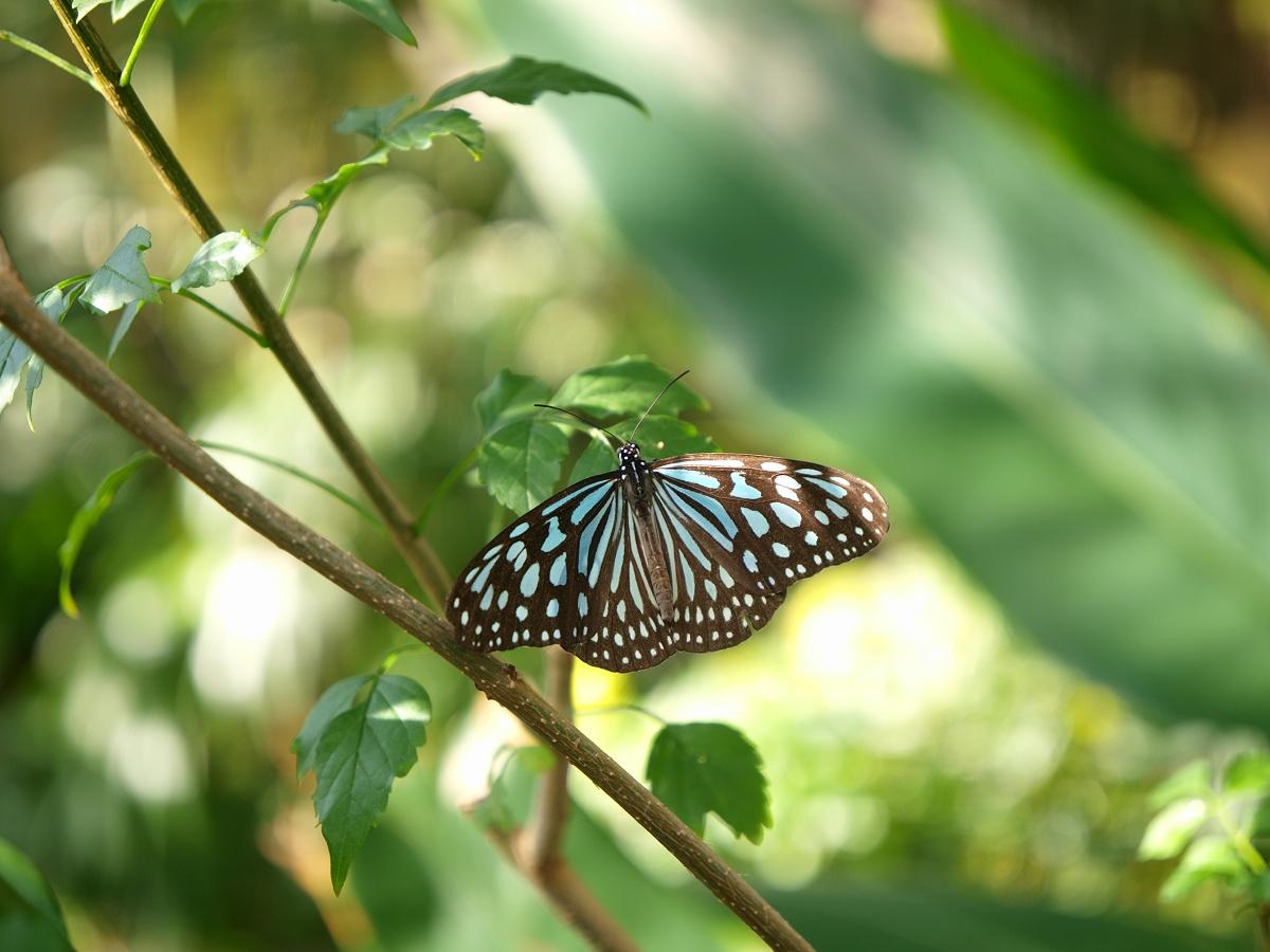 昆陽池公園と伊丹市昆虫館 その3_c0187587_1564917.jpg