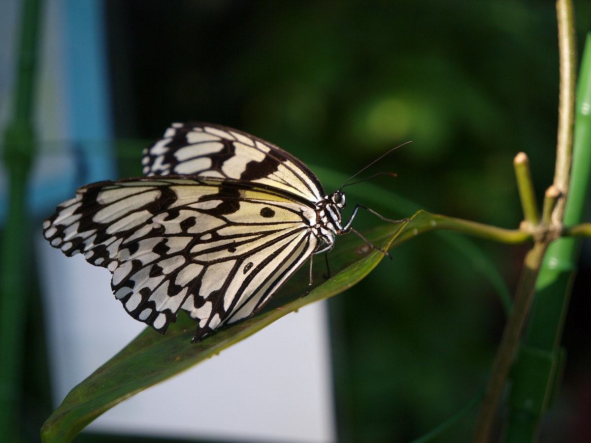 昆陽池公園と伊丹市昆虫館 その3_c0187587_1583679.jpg