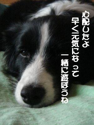 b0101991_21344759.jpg