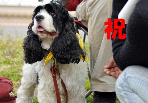 第55回ちばわん いぬ親会 in湘南(第5回) ご報告_d0027698_10211843.jpg