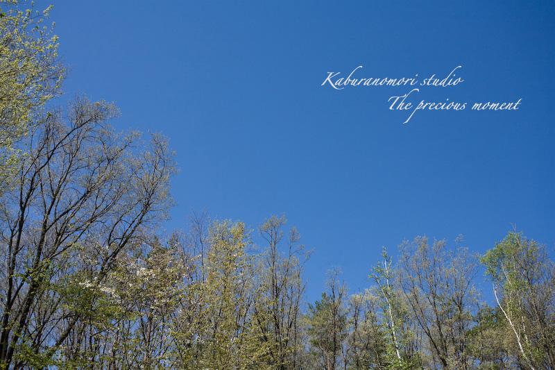 09/4/22      新緑の森と山桜_c0137403_18401021.jpg