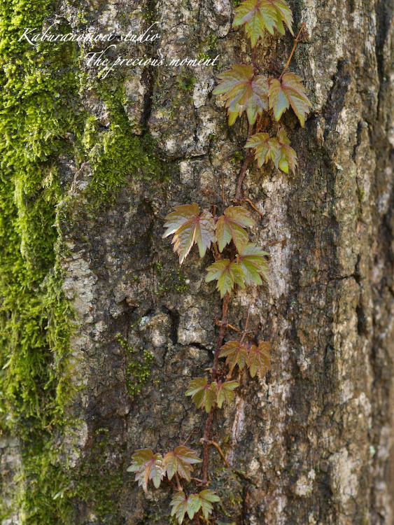 09/4/22      新緑の森と山桜_c0137403_18431964.jpg