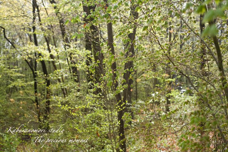 09/4/22      新緑の森と山桜_c0137403_18434963.jpg