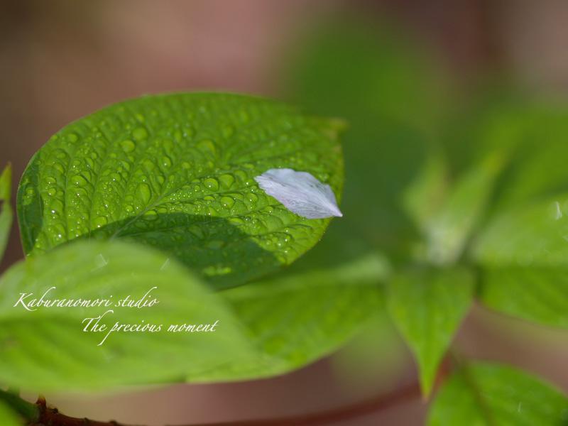09/4/22      新緑の森と山桜_c0137403_18441649.jpg