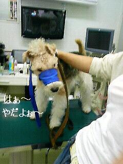 病院行ってきましたぁぁぁぁぁぁ_f0208806_21243321.jpg