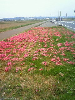 今年も花が咲きました。_b0130512_12455993.jpg