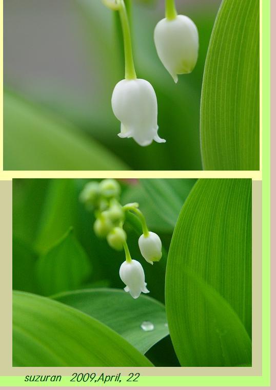 花が咲いた_d0147812_12544521.jpg