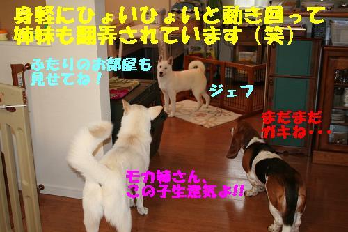 f0121712_162206.jpg
