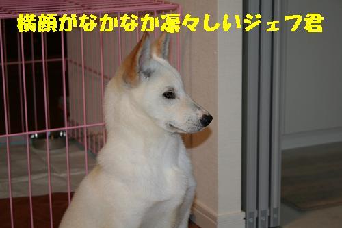 f0121712_16235629.jpg