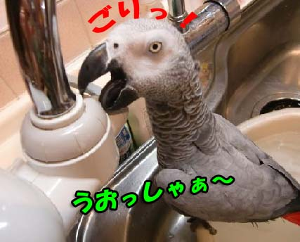 c0133013_15582013.jpg