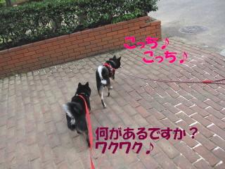 c0185516_18214424.jpg