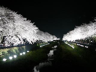 野川_c0025217_1810291.jpg