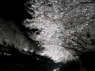 野川_c0025217_181273.jpg