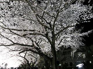 野川_c0025217_18132752.jpg