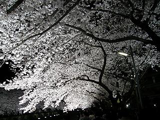 野川_c0025217_18133663.jpg