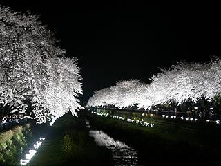 野川_c0025217_189472.jpg