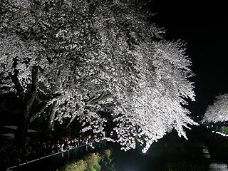 野川_c0025217_1895699.jpg