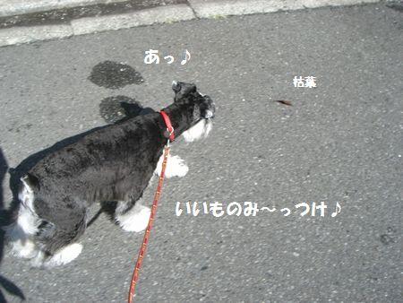 f0197317_1511382.jpg