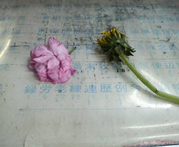 春のプレゼント_e0124021_1805581.jpg