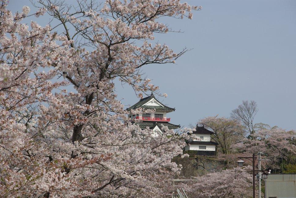 城山公園 桜まつり_f0148627_21222112.jpg