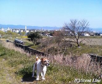ウェルシュ・コーギー・カーディガンさんのお散歩_c0099133_6463441.jpg