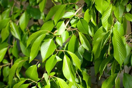 葉もかわいいでしょう_b0145257_232303.jpg