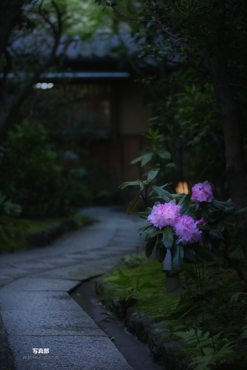 そうだ 京都、行こう。_f0021869_22392294.jpg
