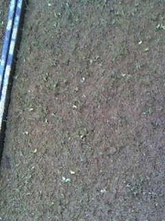 芽だし_e0036983_6534550.jpg