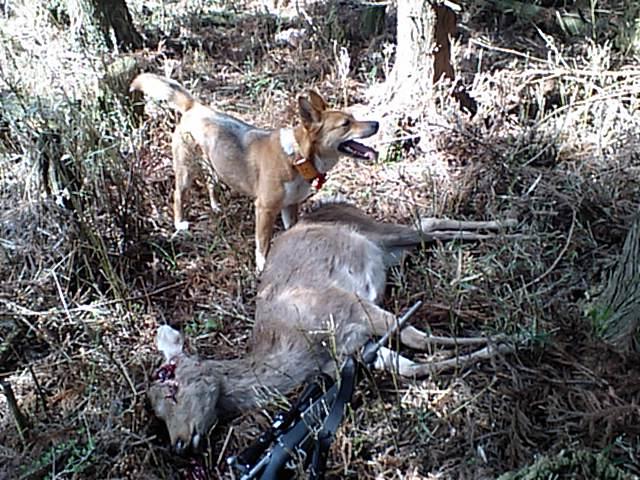 日本鹿のクリーンキルを目指して  その3_e0056797_8542626.jpg