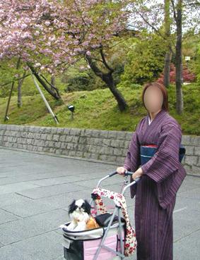 美奈ちゃんと東山へ_c0199014_1042938.jpg
