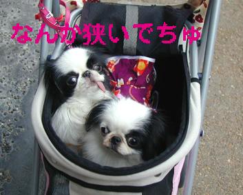 美奈ちゃんと東山へ_c0199014_10435763.jpg