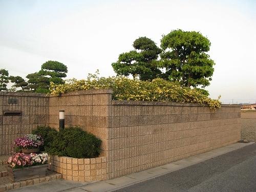 タラの芽とタケノコ_e0072023_2136225.jpg